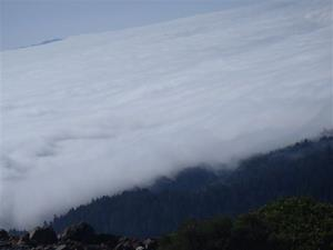 Click to view album: Mt Tamalpais Tour - March 2013